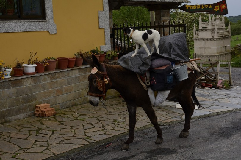 Dia 1 Camino Obradoiro Dani Masso  (26)